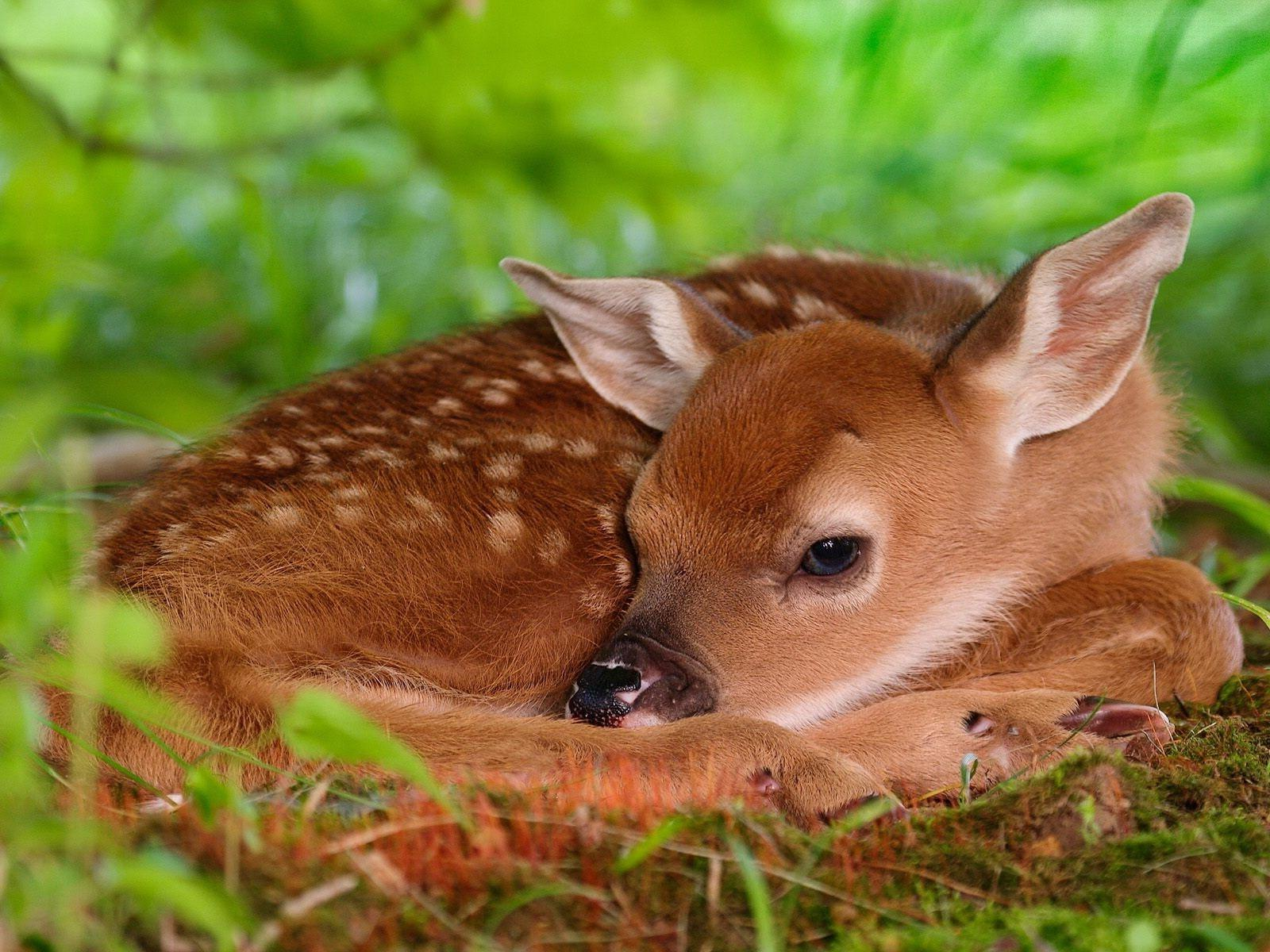 Bambi Baby Coupons 11 Hot Deals March 2020
